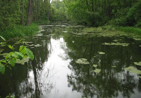 Gewässerbild des nördlichen Altwassers
