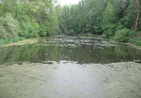 Gewässerbild des südlichen Altwassers