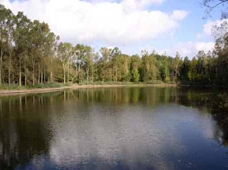 Gewässerbild des Riedsee 3