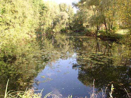 Gewässerbild der Steinernen Furt 2